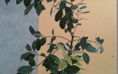Vzgajamo zelišča: vonj in okus