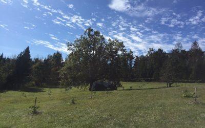 Projektni teden – Zgodbe o drevesih
